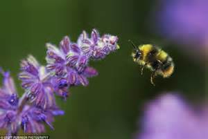 Judges Chair Schoolboy S Bee Snap Buzzes To First Place In Wildlife
