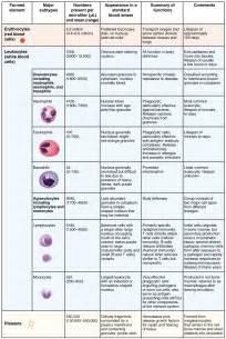 erythrocytes 183 anatomy and physiology