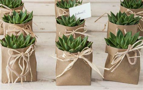 piante grasse da interno con fiori piante grasse piante da appartamento zubini