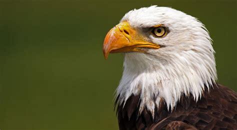 Audubon Eagle Watch - Downtown Davenport Partnership