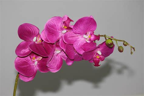Cari Pot Anggrek jual bunga artifisial anggrek orchid flower ag