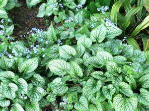 from the ground up choosing the right ground cover for