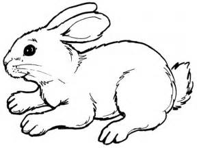 bunny coloring pictures rabbits coloring pages realistic realistic coloring pages