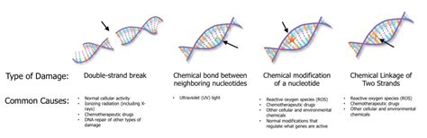 Do Uv Ls Cause Cancer by Dna Damage And Skin Cancer It S Not All About The Sun