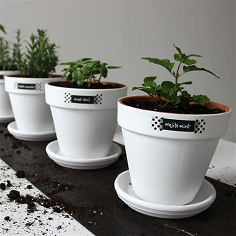 creating an indoor herb garden creating an indoor herb garden home design ideas and