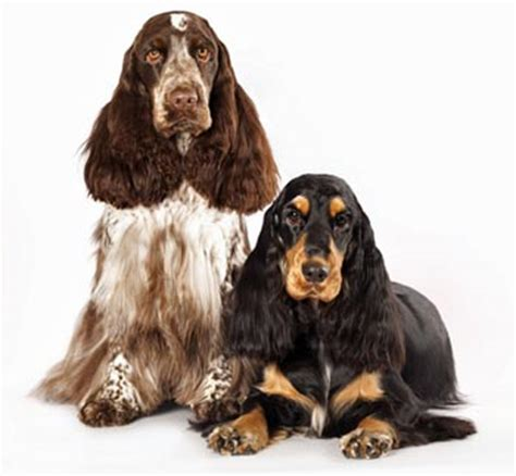 should you tip groomers grooming tips for grooming cocker spaniels