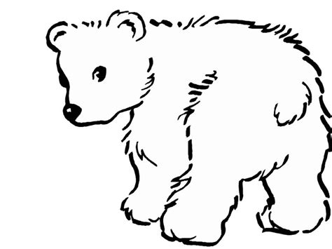 baby polar bear coloring pages az coloring pages