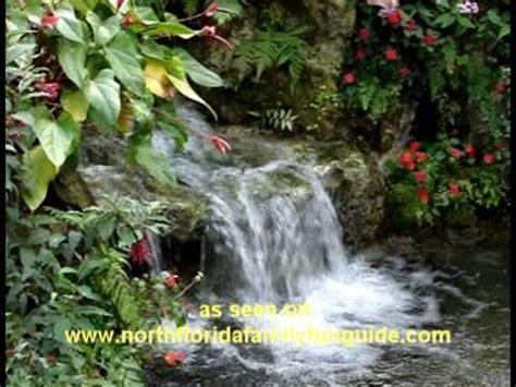 Gainesville Butterfly Garden by Butterfly Rainforest Gainesville Florida