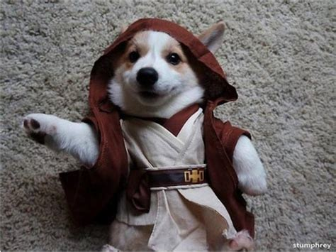 wars puppy dogs in wars costumes darth vader yoda ewok 29 pictures snappy pixels