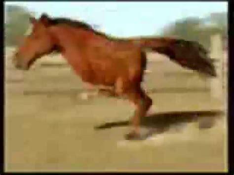 imagenes de animales raros y deformes caballo de dos patas youtube