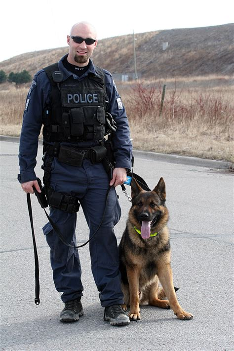cop dogs 1000 ideas about k9 on dogs belgian malinois and