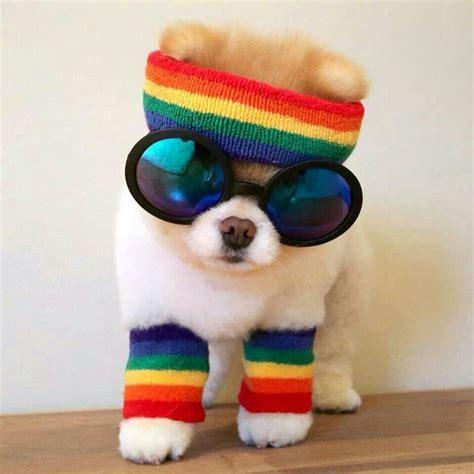 rainbow puppy rainbow puppy animals