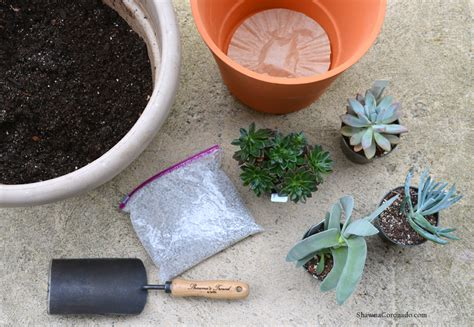 Soil Mix For Outdoor In Ground Succulents - best succulent container garden soil mix coronado