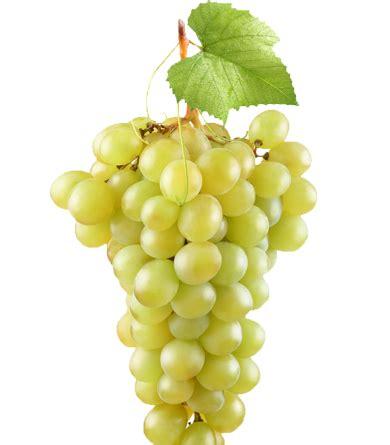 imagenes de uvas en hd m 225 s uvas en la boca world record blaffin