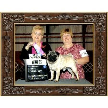 pug breeders pennsylvania locust hill pugs pug breeder in smithfield pennsylvania