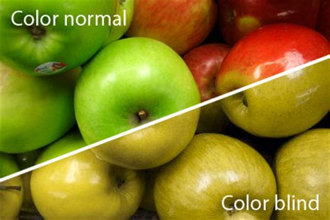 what does color blindness look like colour blindness what do you see