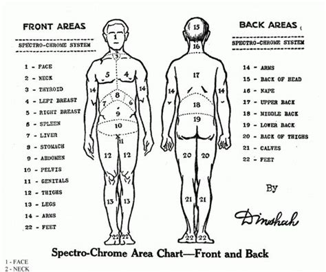 tattoo pain chart front and back body chart google search anatomy physiology