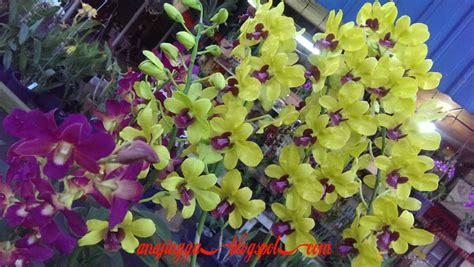 wallpaper bunga yg cantik bunga orkid yang cantik anajingga