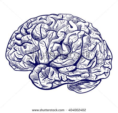 colored lines for the brain oldtime engraving brain stock vector 11131276