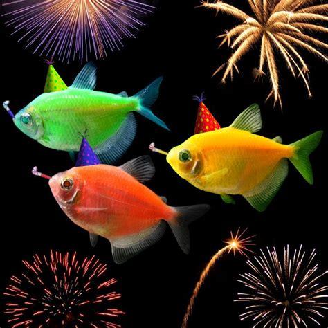 new year singing fish happy new year from the glofish 174 team meet glofish