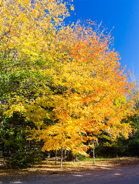 fall colors 2015 fall foliage 2015 foci pictures