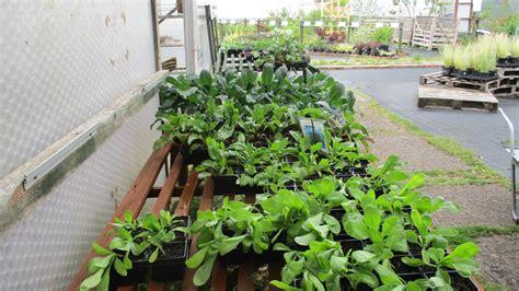 chorlton plant nursery home facebook