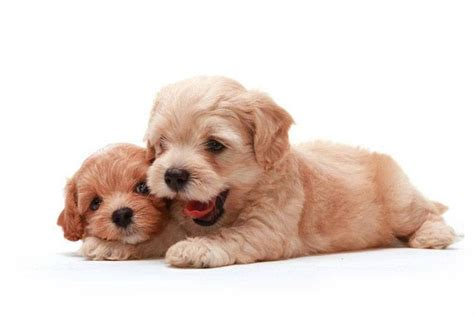 puppy pals names puppy names for your pal
