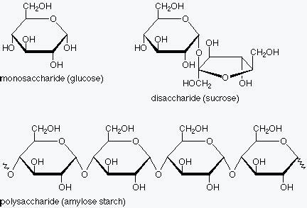 carbohydrates levels of organization these are images of monosaccharaides or one sugar they are