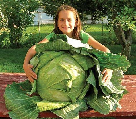 four hardest vegetables to grow from seed buy transplants the garden of eaden june 2011