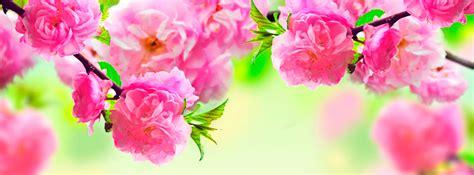 imagenes de flores bonitas para portada portadas para facebook flores imagui