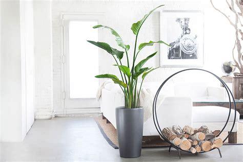 idee  arredare il salotto  piante da interno