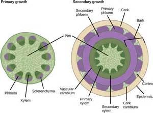stems boundless biology