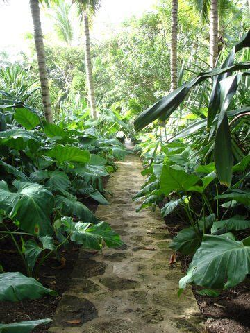 17 best images about gardens punta cana dominican