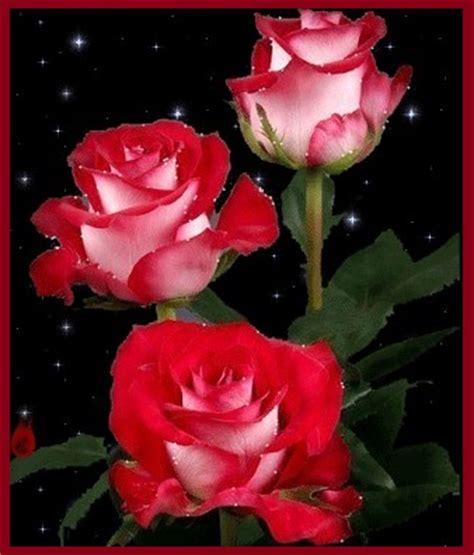 imagenes con movimiento de rosas rojas imagenes de rosas rojas para descargar gratis imagen de