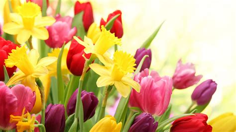 image of spring flowers spring flowers hd wallpapers