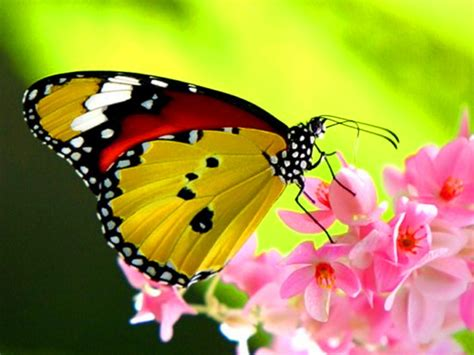 Images Of Beautiful Butterflies
