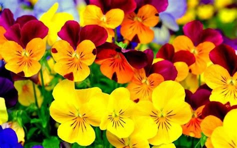 why are flowers brightly colored bright colorful flowers wallpaper www imgkid the