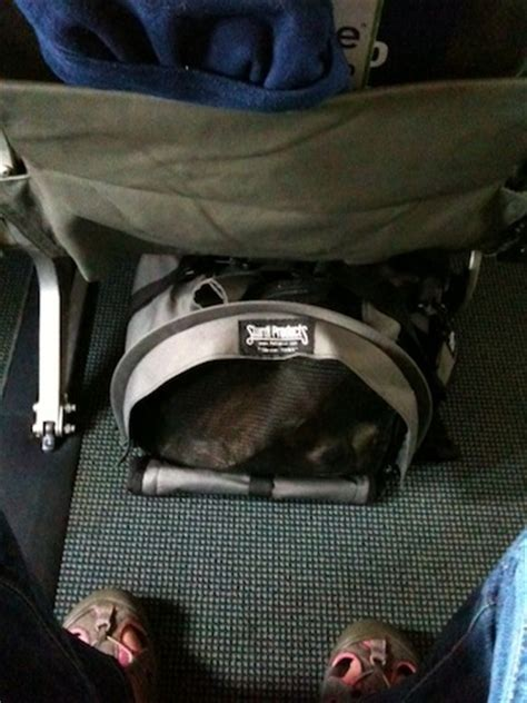 Delta Airlines Pets In Cabin by Which Seat Works Best With An In Cabin Jetblue A320 187 Jaunt