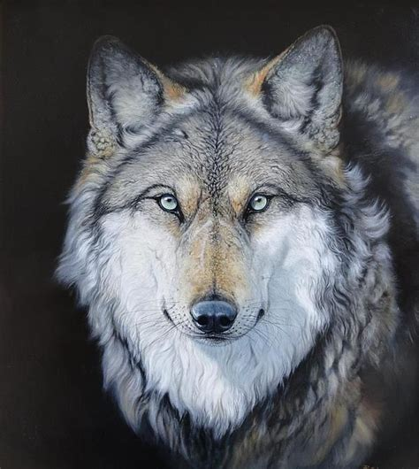 10 Best Wolf Makeup Images On Pinterest Artistic Make Up | 17 best images about wolf head tattoo ideas on pinterest