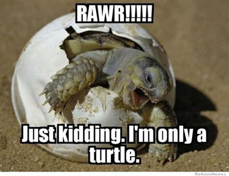 Funny Laugh Meme - funny haha laugh meme image 676859 on favim com