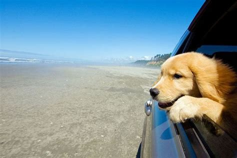 uncommon golden retriever names best 25 golden retriever names ideas on a puppy puppies and