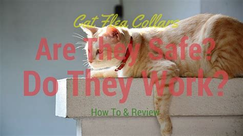 how to use collar 4 best flea collar for cats and how to use it cat overdose