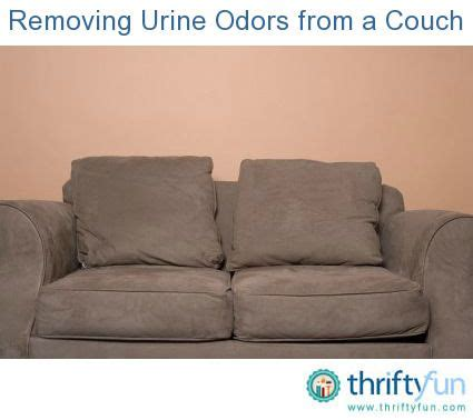 Removing Urine Odors From A Couch Urine Odor
