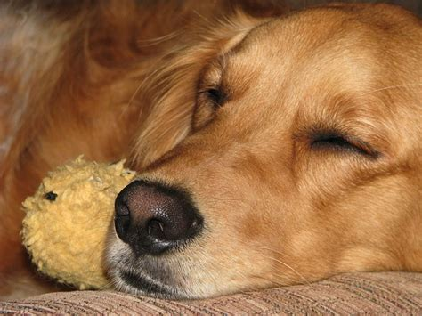 dreams about dogs psychology 10 facts on how your s mind works the everything site