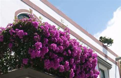 concorso balcone fiorito caiazzo quot balconi fioriti quot un concorso per pi 249