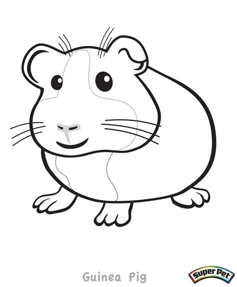 guinea pigs online splash page critter coloring pages