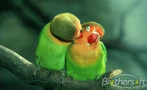 imagenes de animales romanticos image beautiful picture impremedia net