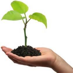 canterbury maspalomas p5 blog science plant diaries