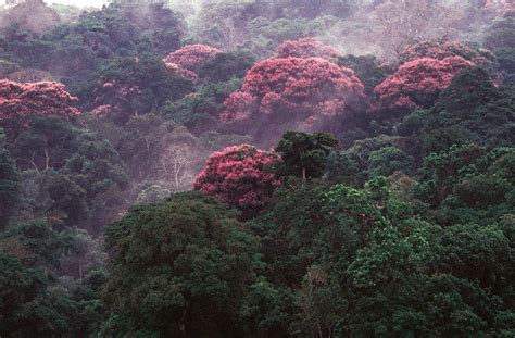 What Does The Word Canopy Rising Temperatures More Blooms For Tropical