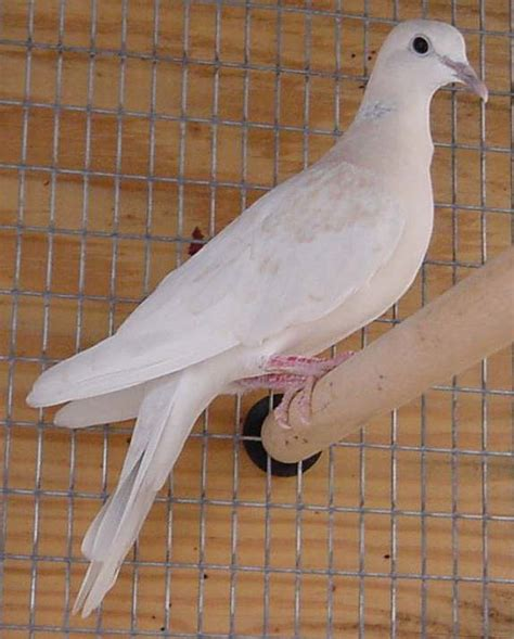 dovepage com buy a dove